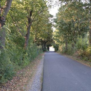 Weg kurz vor Wewelsburg