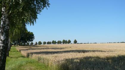 Die Baumallee zur Siedlung Einsiedel.