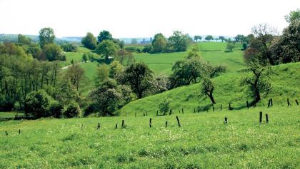 Wiesenlandschaft um Bendorf.