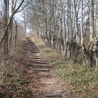 Treppenweg zur Achalm am NSG Wagenhals