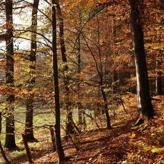 Herbst im Waltersbachtal