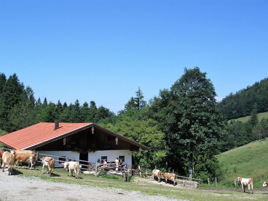 Herrenalm-©Quelle: Gemeinde Bernau a. Chiemsee
