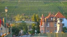 Weinlehrpfad Markelsheim