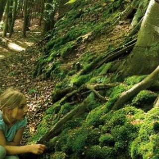 Plauer Stadtwald