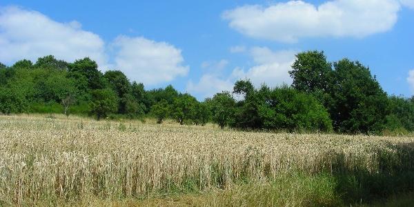 Rund um Winnweiler prägen weite Felder die Landschaft.