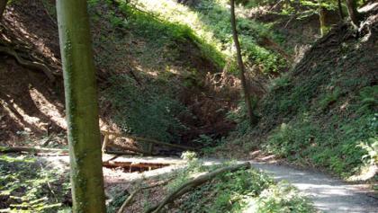 Die Tour führt uns vorwiegend durch angenehm schattige Wälder.