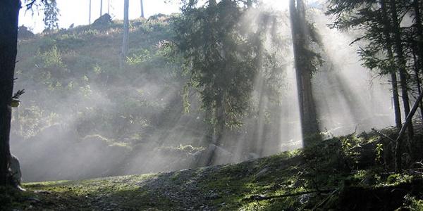 Aufstieg durch den Wald zur Karalm