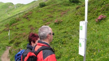Wandern in Faschina