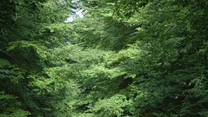 Blick ins Steinheimer Holz