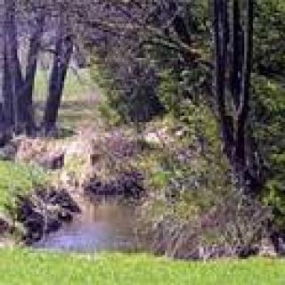 Naturdenkmal Aurikelschlucht - bei Engetried