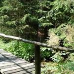 Holzsteg beim Spengerwirt
