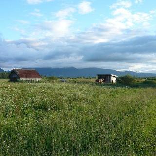im Loisach-Kochelsee-Moor