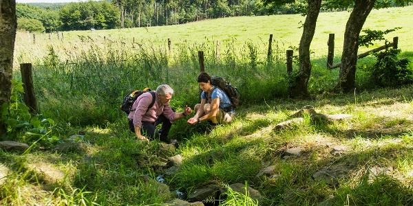 Le petit ruisseau qui sort de l'étang de la source est le début de la rivière Lahn - ètape 1