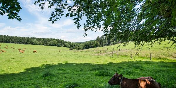 Entspannt am Lahnhof kurz hinter der Lahnquelle