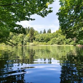 Still ruht der Teich