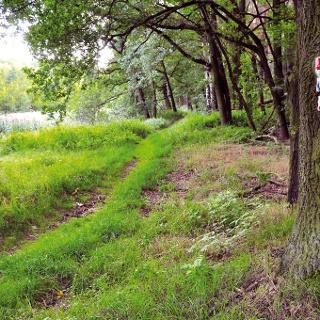 Im Rädigker Wald