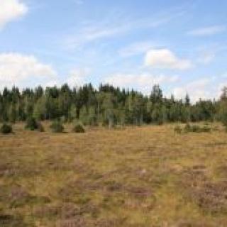 Spurensuche im Niedermoor