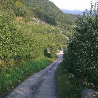 Rückweg durch die Apfelbäume