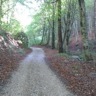 Forstweg Richtung Selvapiana