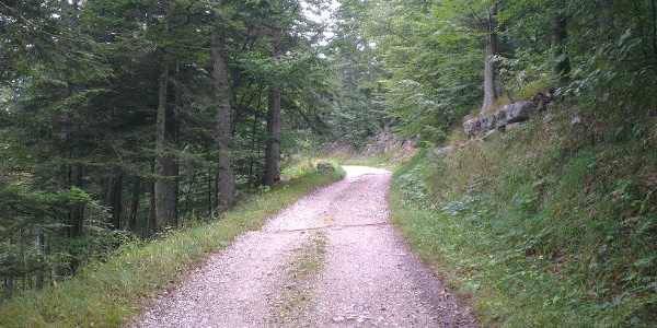 Strada forestale.