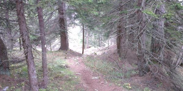 Tratto finale nel bosco.