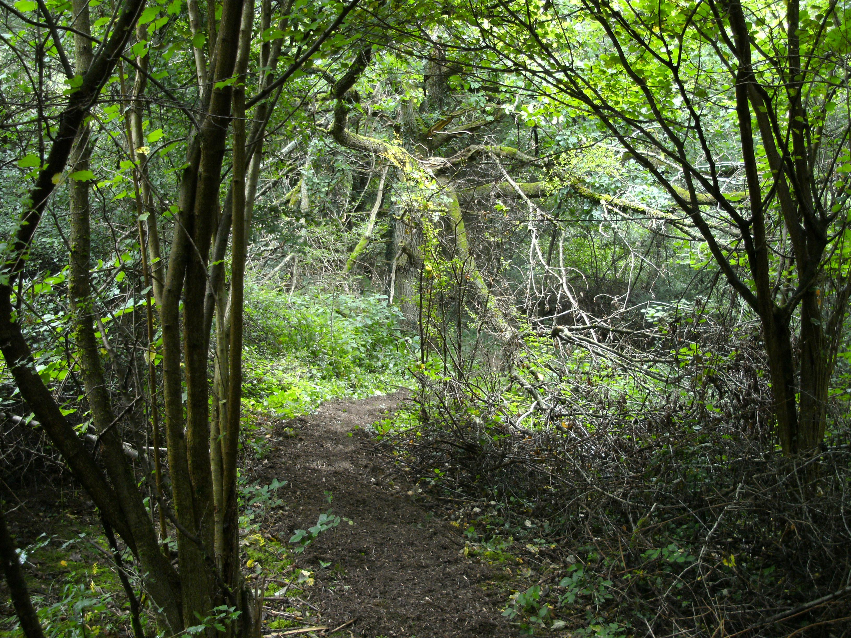 Wandern im schattigen Wald