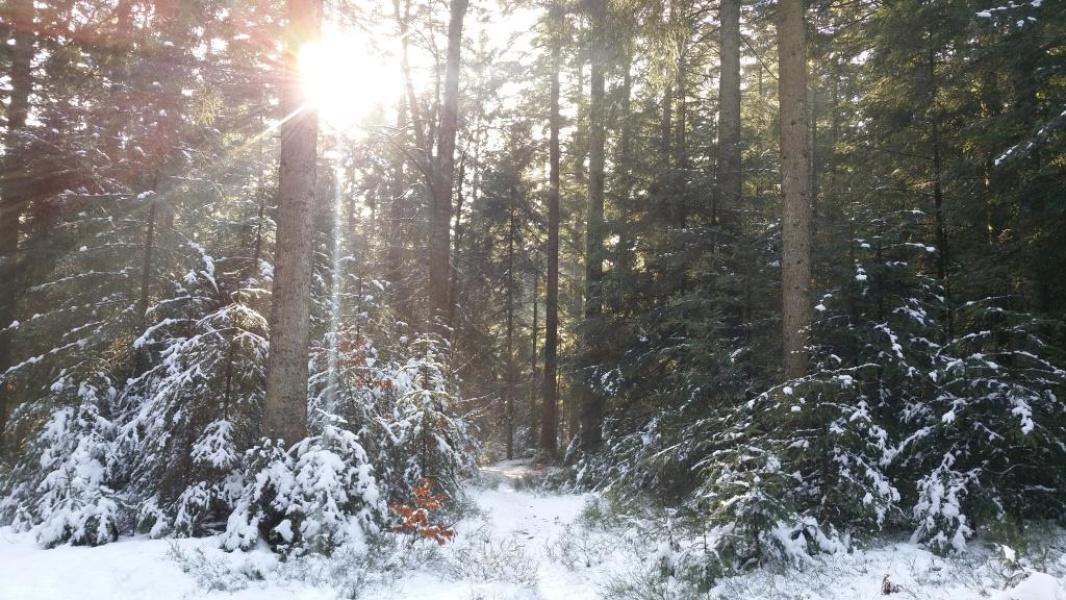 Freudenstadt - Verschneiter Winterwald