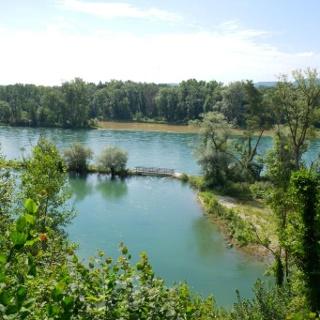 Seitenarm des Rheins unterhalb der Buchberger Fischteiche