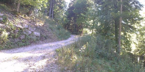 Dura salita su strada forestale.