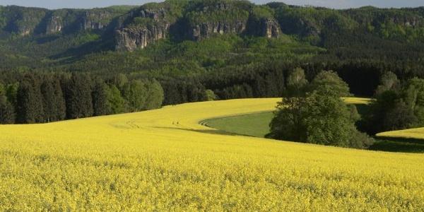 Affensteine (c) ? / Tourismusverband Sächs. Schweiz