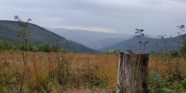 Ausblick vom Westweg ins Renchtal