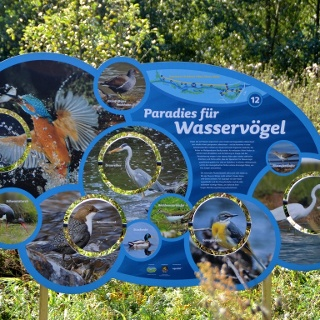 Infotafel: Paradies für Wasservögel