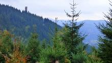 Auf dem Renchtalsteig zur Renchtalhütte und zum Buchkopfturm