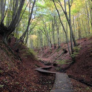 Steg im Tretschbachtal - Siebengebirge