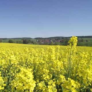 Blick auf Hatzbach.