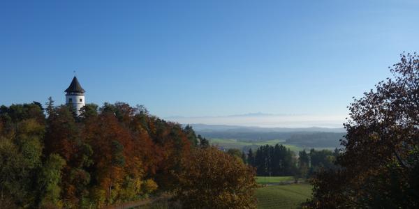 Blick auf den Aussichtsturm von Hohenbodman.