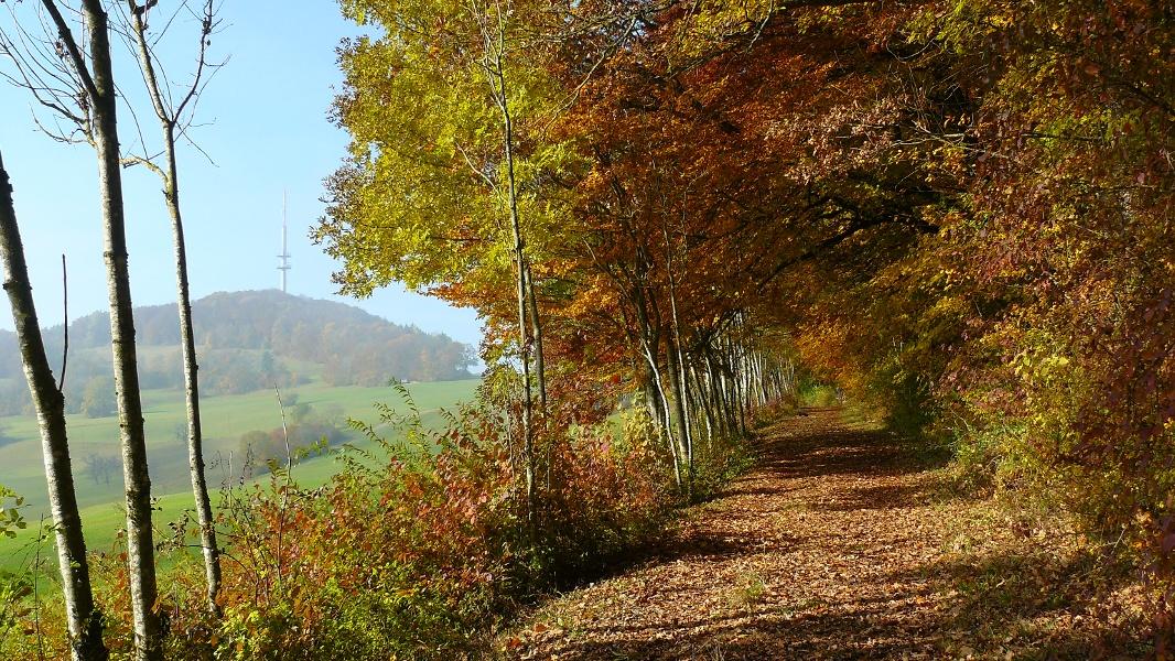 Vom Wanderparkplatz Bergscheuerhöfe zur Küssaburg