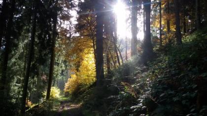Belgenbachtal bei Imgenbroich