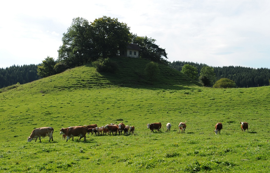 Scheffheu-Rundweg