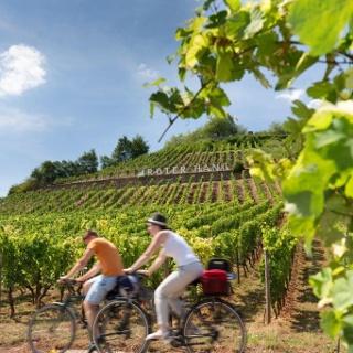 Radeln an der berühmten Weinlage