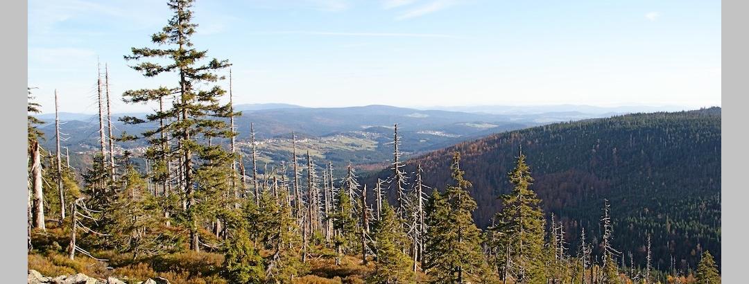 Ausblick vom Steinfeckberg ins Reschbachtal mit Finsterau