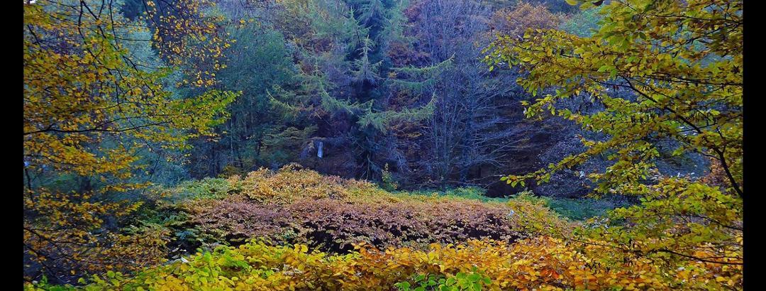 Tal der Wupper zwischen Wiesenkotten und Müngsten
