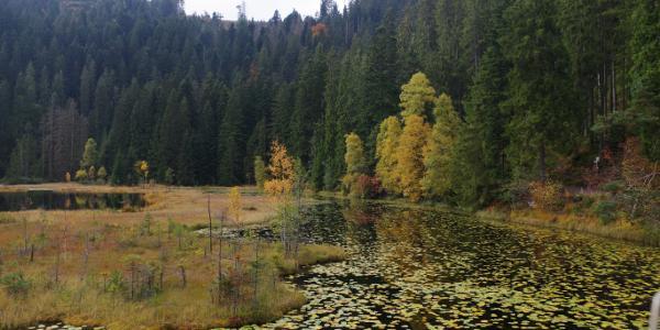 Der Huzenbacher See ist wie die anderen Karseen im Nordschwarzwald vor 20.000 bis 30.000 Jahren entstanden