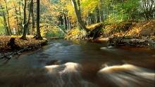 Waldroute: Altes Land am Elbstrom Radrundroute