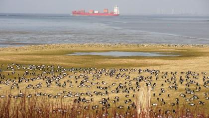 Blick vom Natureum Niederelbe auf Elbmarsch und Ostemündung mit Containerschiff