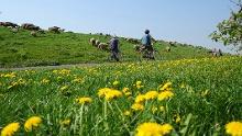 Nordseeküsten-Radweg: Altes Land am Elbstrom Abschnitt
