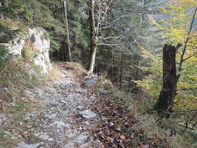 Über einen Waldpfad wandern wir bergab.