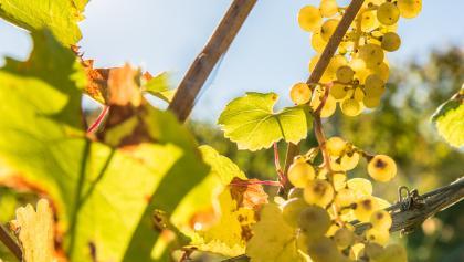 Lavanttaler Wein