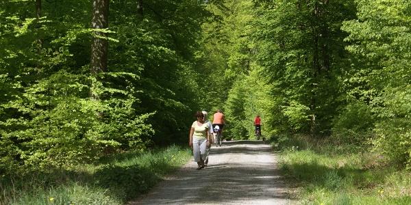 Im Forstwald bei Untergimpern