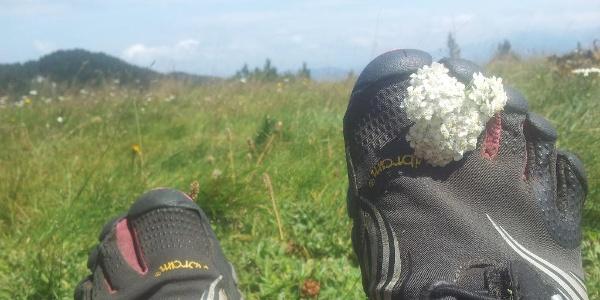 Catching flowers on Čvrsnica
